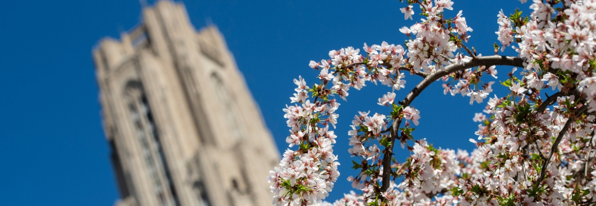 The Cathedral of Learning with blossoms in the foreground